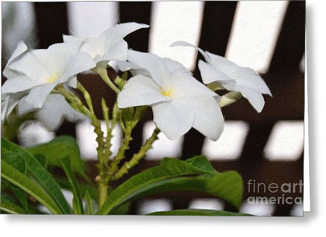 White Plumeria-under The Trellis Greeting Card