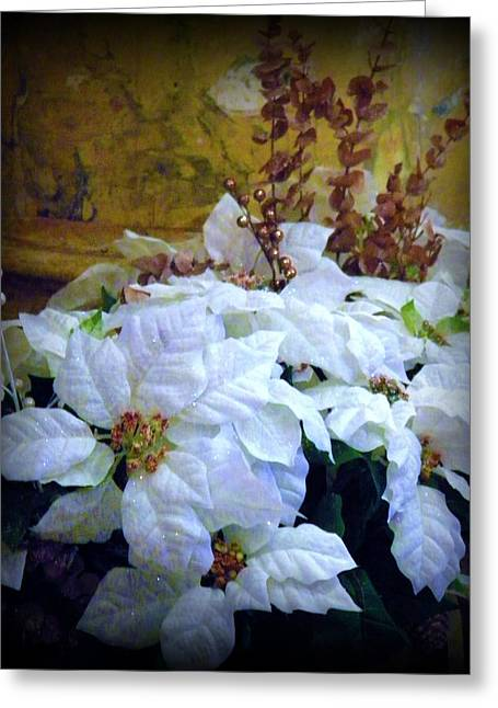 Greeting Card featuring the photograph White Poinsettia by Michelle Frizzell-Thompson