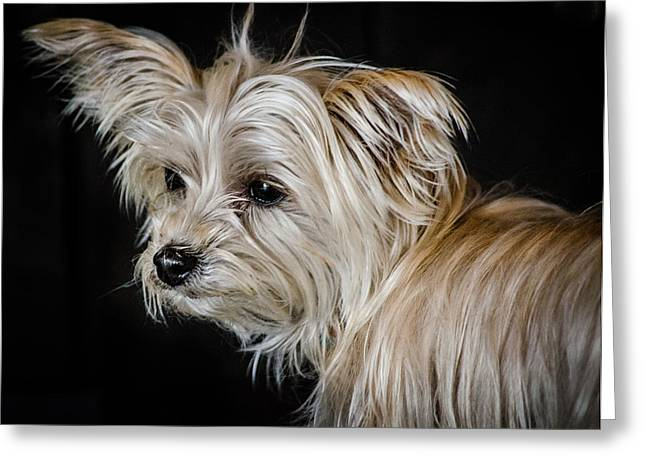 White Puppy Greeting Card by Linda Villers