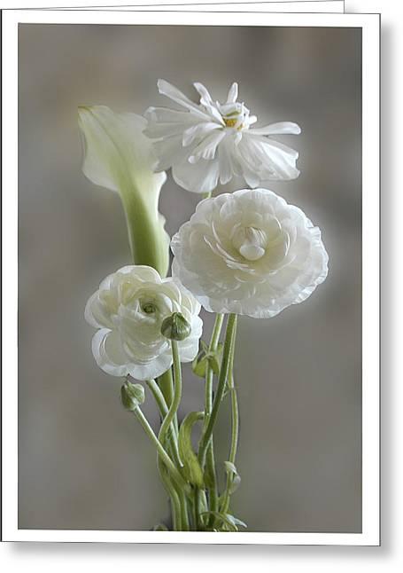 White Ranunculus  Greeting Card by Geraldine Alexander