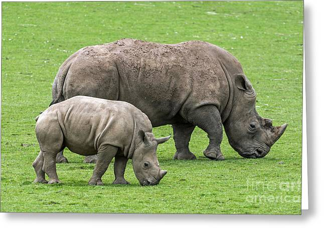 White Rhino 8 Greeting Card