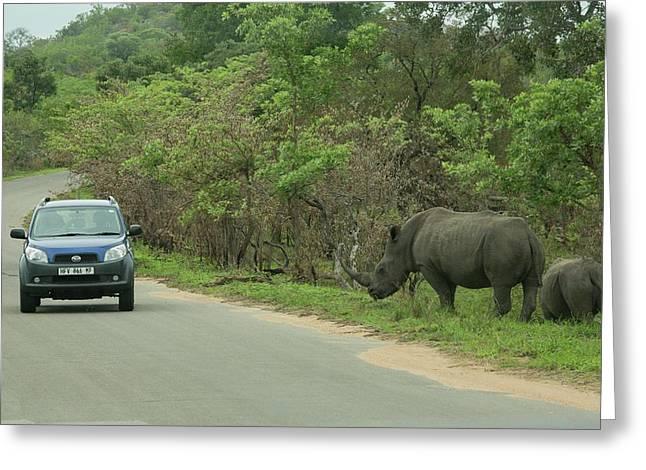 White Rhino And Calf Greeting Card by Bob Gibbons