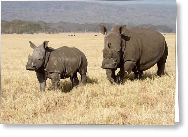 White Rhino Calf Greeting Card by Chris Scroggins
