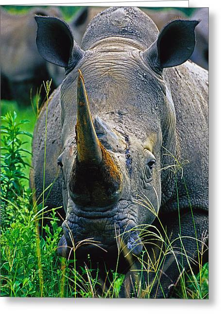 Greeting Card featuring the photograph White Rhino by Dennis Cox WorldViews