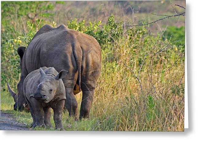 White Rhino  Greeting Card by Gerhardt Marais