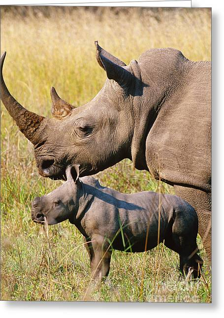 White Rhino Mother And Young Greeting Card by Art Wolfe