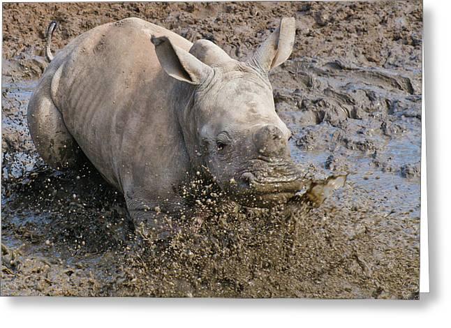 White Rhinoceros Calf Greeting Card