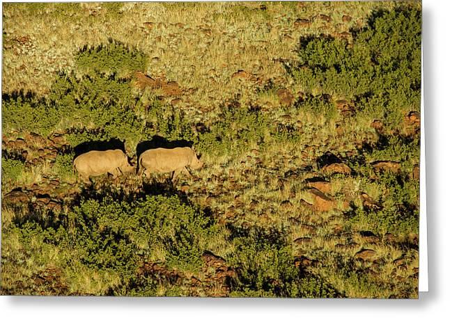 White Rhinoceros (ceratotherium Simum Greeting Card