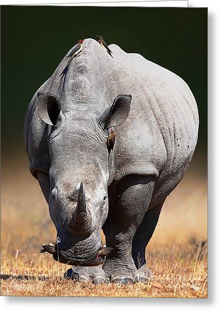 White Rhinoceros  Front View Greeting Card by Johan Swanepoel