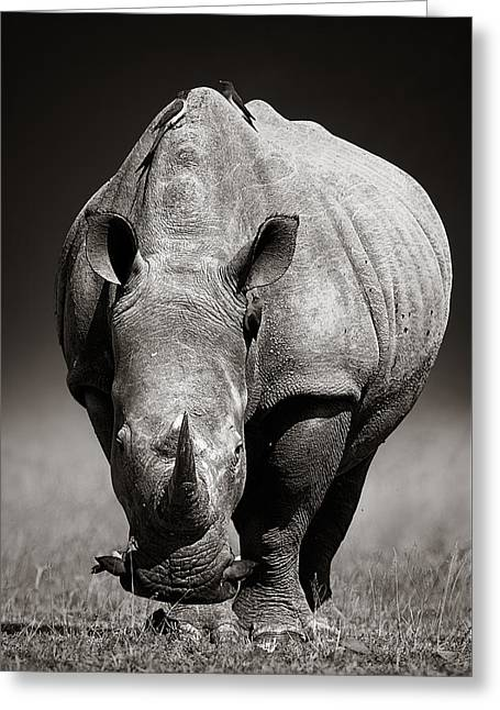White Rhinoceros  In Due-tone Greeting Card by Johan Swanepoel