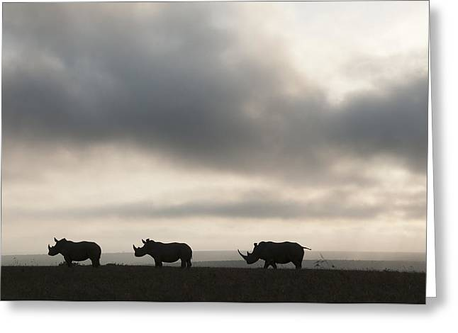 White Rhinoceros Trio At Sunset Kenya Greeting Card by Tui De Roy