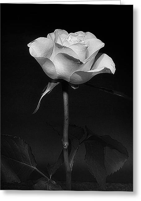 Greeting Card featuring the photograph White Rose #02 by Richard Wiggins