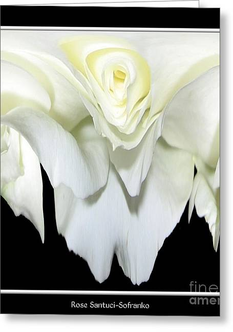 White Rose Abstract Greeting Card by Rose Santuci-Sofranko