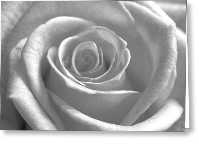Greeting Card featuring the photograph White Rose Glooming by Silke Brubaker