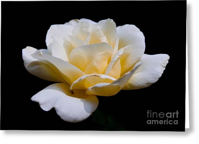 White Rose Greeting Card by Lisa L Silva