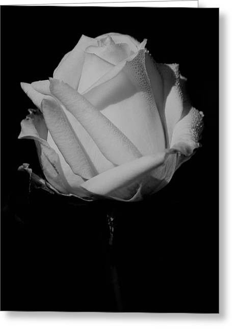 Greeting Card featuring the photograph White Rose by Michelle Joseph-Long