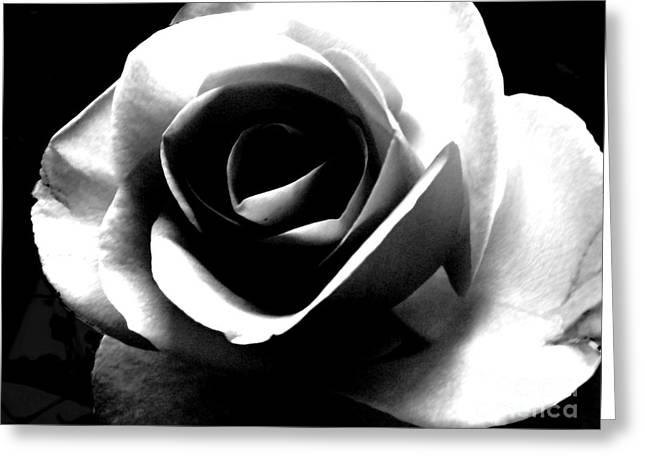 White Rose Greeting Card by Nina Ficur Feenan