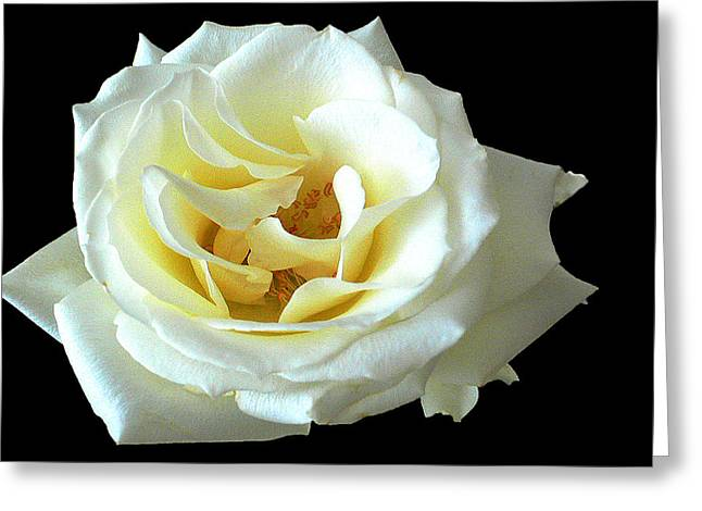White Rose Number One Greeting Card