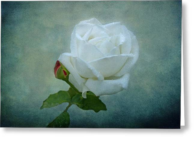 White Rose On Blue Greeting Card by Sandy Keeton