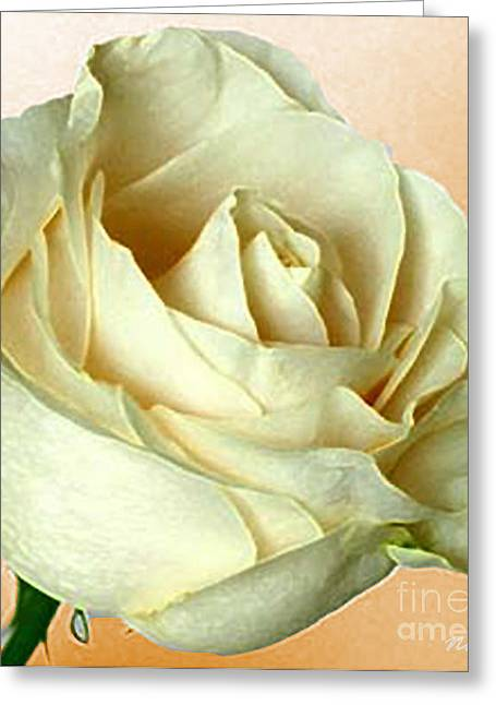 Greeting Card featuring the photograph White Rose On Sepia by Nina Silver