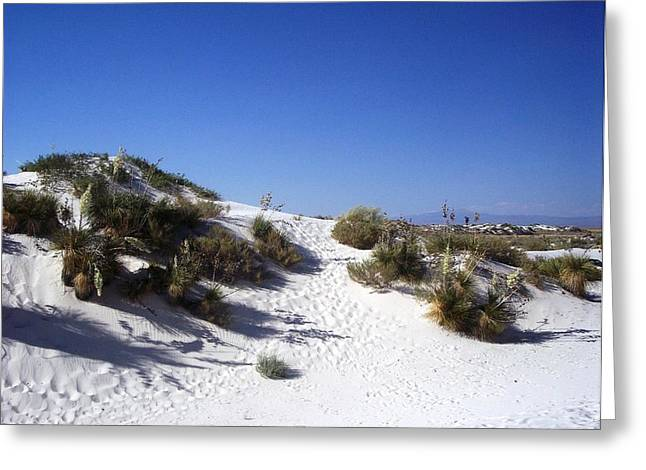 White Sands Foilage Greeting Card by The GYPSY And DEBBIE
