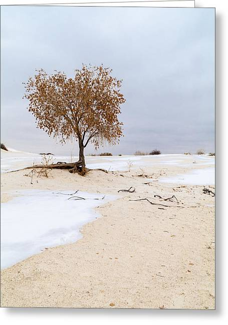White Sands Lone Tree Greeting Card by Brian Harig