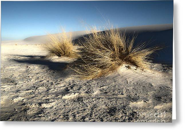 White Sands New Mexico Among The Dunes Greeting Card by Gregory Dyer