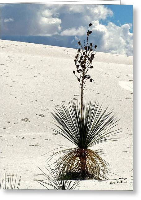 White Sands New Mexico Greeting Card by Marilyn Smith