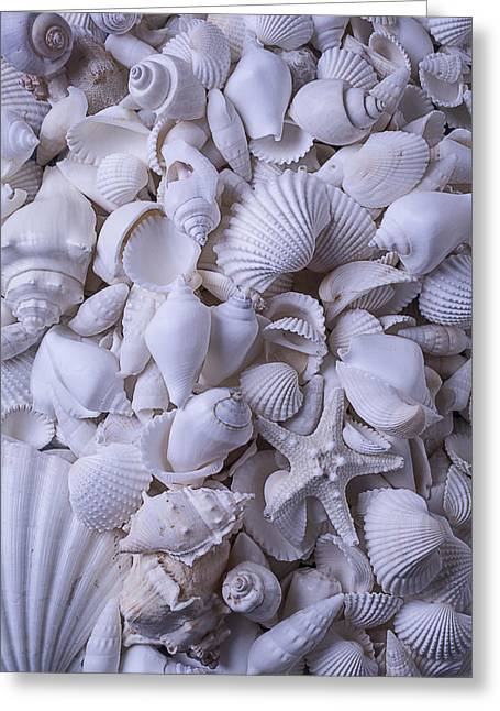 White Sea Shells Greeting Card by Garry Gay