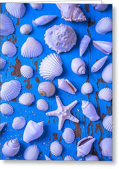 White Sea Shells On Blue Board Greeting Card by Garry Gay