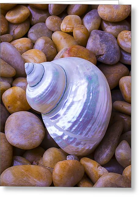 White Snail Shell Greeting Card