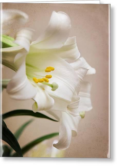 White Softness Greeting Card