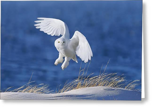 White Spirit Demon Greeting Card