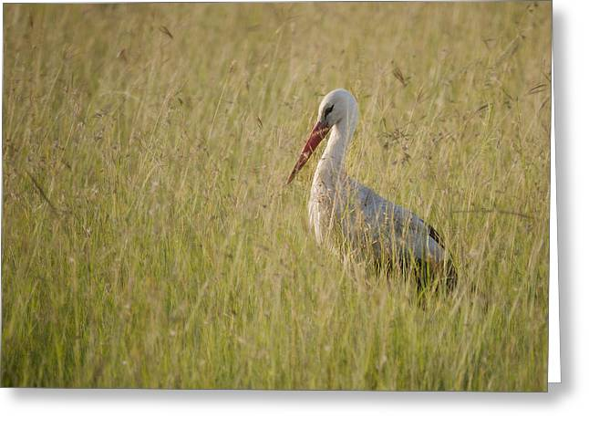 Greeting Card featuring the photograph White Stork by Antonio Jorge Nunes