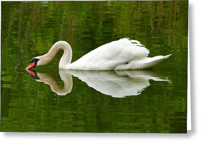 Greeting Card featuring the photograph Graceful White Swan Heart  by Jerry Cowart