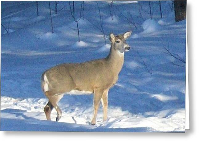 Greeting Card featuring the photograph White Tail Deer by Brenda Brown