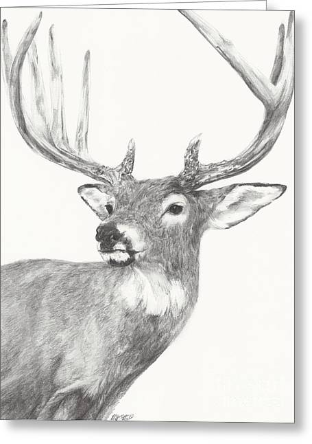 White Tailed Buck Study Greeting Card