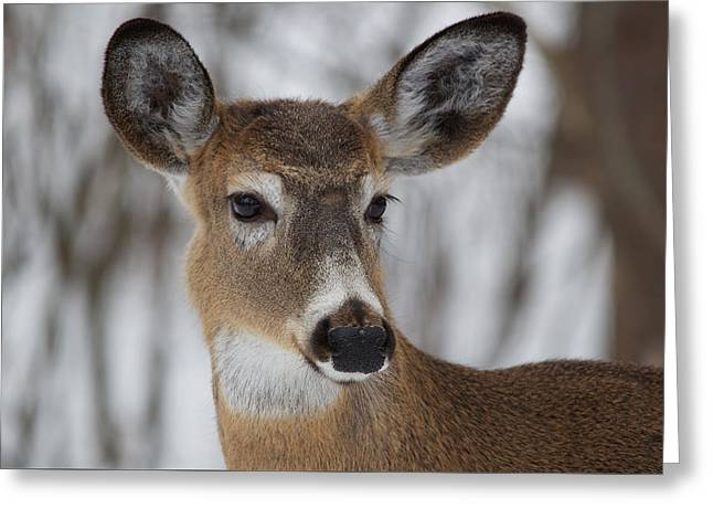White-tailed Deer At Old Quarry Trail Greeting Card by Nature and Wildlife Photography