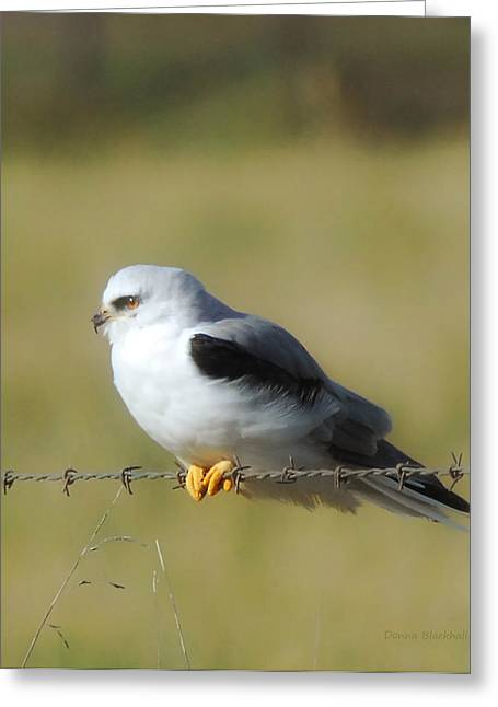 White Tailed Kite Greeting Card by Donna Blackhall