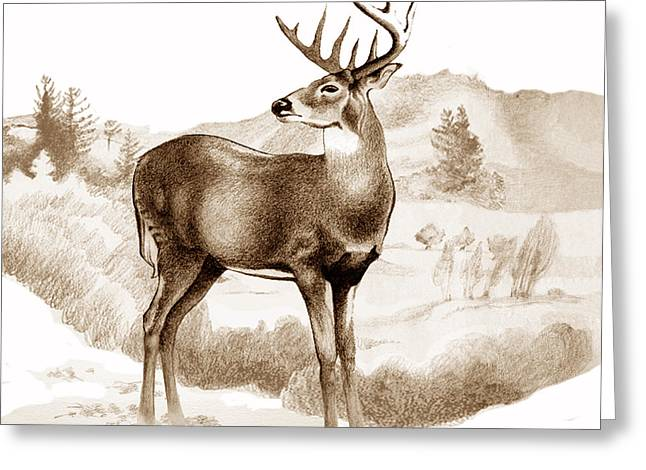 White-tailed Stag Greeting Card