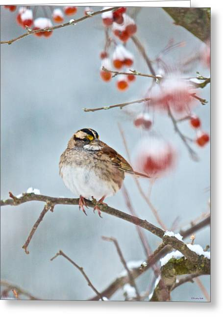 White-throated Sparrow Braving The Snow Greeting Card