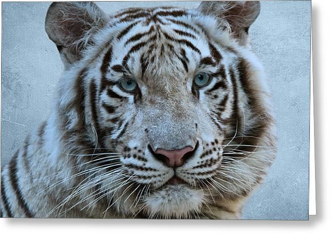 White Tiger Greeting Card by Sandy Keeton
