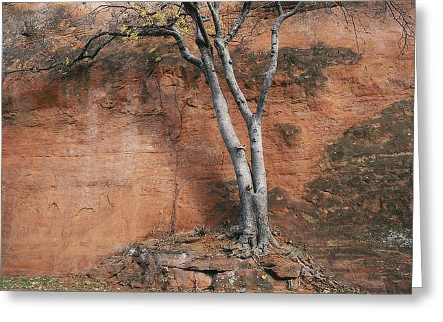 White Tree And Red Rock Face Greeting Card