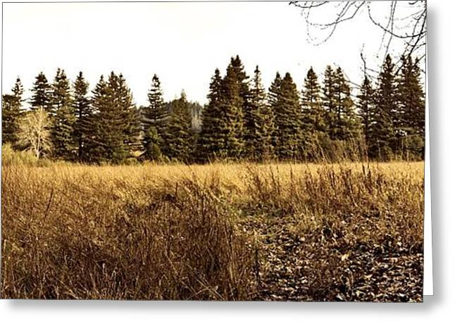 White Tree Panorama Larry Darnell Greeting Card by Larry Darnell