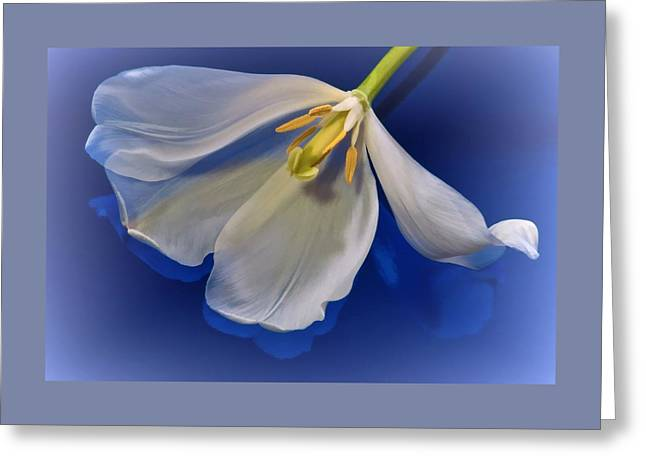 White Tulip On Blue Greeting Card