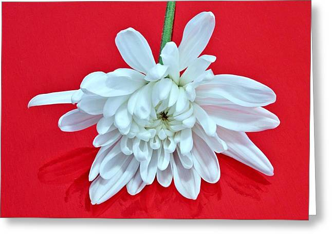 White Flower On Bright Red Background Greeting Card