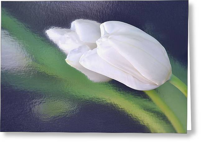 White Tulip Reflected In Dark Blue Water Greeting Card
