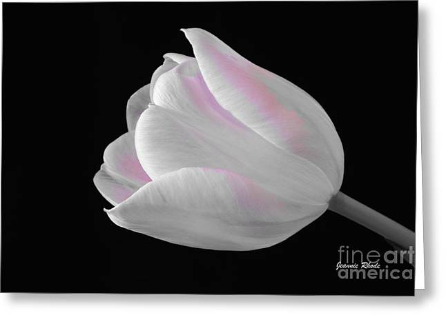 Greeting Card featuring the digital art White Tulip With Pink by Jeannie Rhode