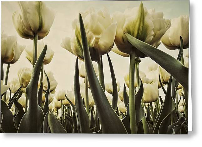 White Tulips Greeting Card by Yvon van der Wijk