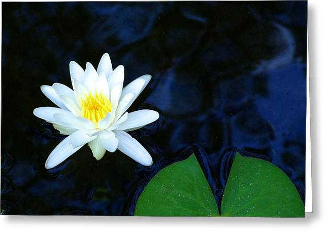 White Water Lilly Abstract Greeting Card by Judith Russell-Tooth